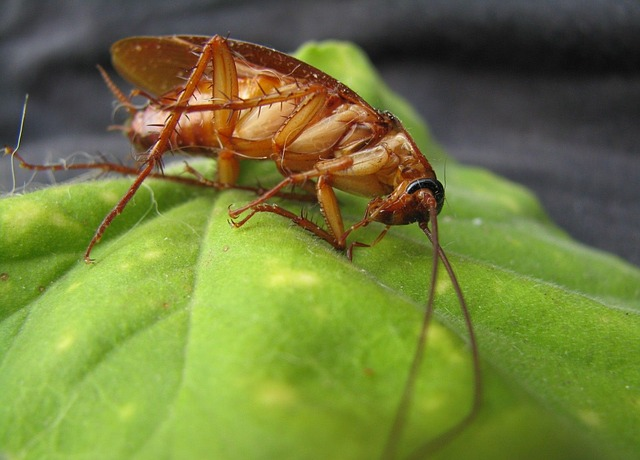 Tips On Controlling Pest Problems
