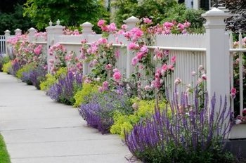 The Role Of Plants In Landscape Design