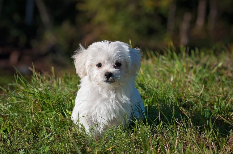 How To Find A Quality Dog Sitter In Melbourne